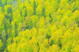 forêt de montagne profonde.