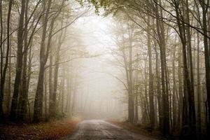 route forestière brumeuse