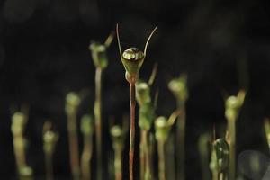 forêt d'orchidées verdoyantes