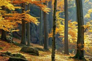 rocher dans la forêt de hêtres photo