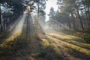 brouillard dans la forêt d'automne