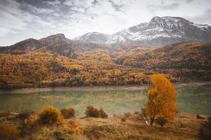 forêt d'automne photo
