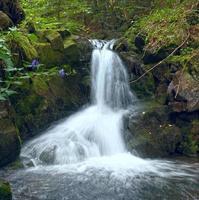 cascade dans la forêt de montagne photo