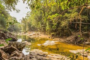 forêt de ruisseau photo