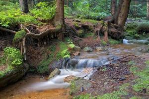 ruisseau de la forêt photo