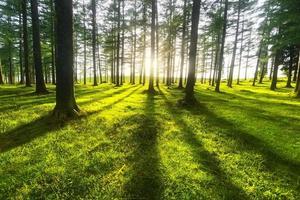 forêt ensoleillée photo