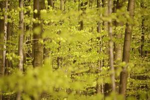 forêt de printemps photo