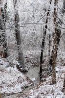 forêt gelée photo
