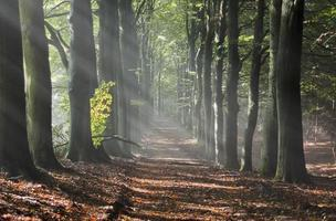 rayons du soleil en forêt photo