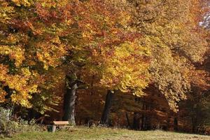 forêt de hêtres d'automne photo