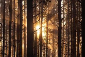 lever du soleil en forêt photo