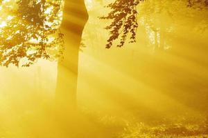 rayons du soleil dans la forêt photo