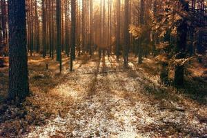 soleil, la première forêt de neige photo