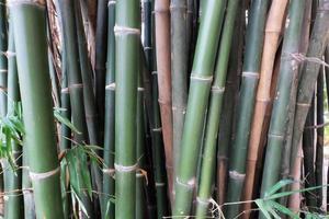 fermer la forêt de bambous verts