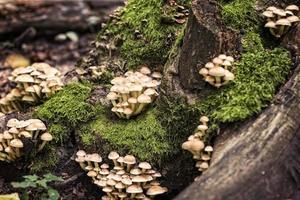 petits champignons dans une forêt photo