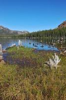 lacs peu profonds, entourés de forêt