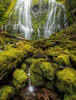 proxy tombe dans la forêt tropicale de l'Oregon. photo