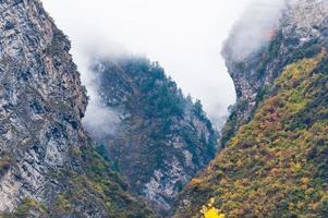vallée dans la brume