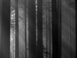 lumière de la forêt d'automne (noir et blanc) photo