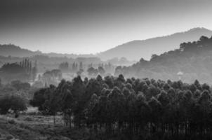 forêt abstraite noir et blanc avec montagne