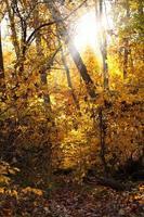 forêt d'automne. tomber
