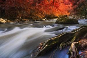 cascade de forêt profonde photo