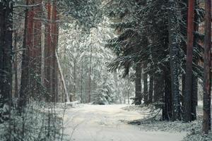 paysage d'hiver givré dans la forêt enneigée photo