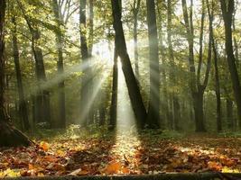 forêt d'automne brumeuse au lever du soleil