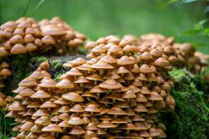 champignons photo