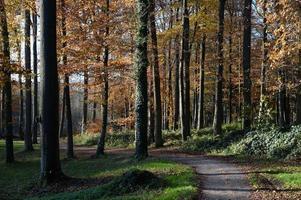 bäume photo