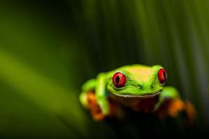thème tropical de la forêt tropicale avec grenouille colorée