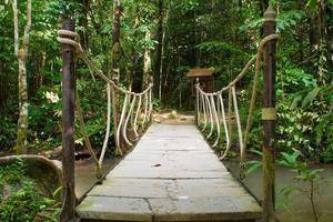 pont de corde sur la rivière en forêt photo