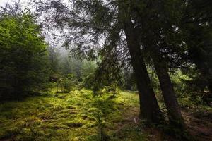 brouillard mystique profond dans une forêt photo