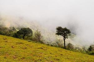 forêt avec brouillard