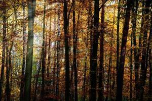 soleil dans la forêt d'automne photo
