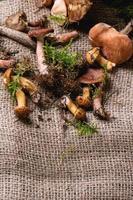 mélange de champignons forestiers photo