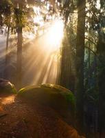belle forêt et rayons de soleil