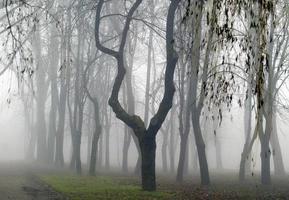 forêt dans le brouillard photo