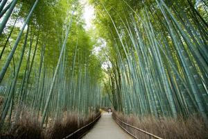 forêt de bambous, kyoto japon photo