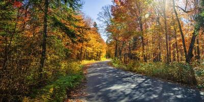 route dans la forêt d'automne