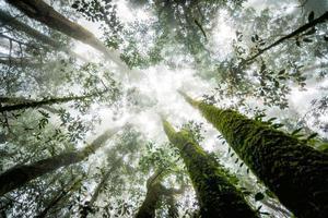 forêt d'arbres en saison d'automne de la Thaïlande