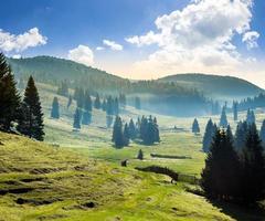 brouillard sur forêt dans les montagnes au lever du soleil