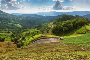 paysage avec champ de maïs vert, forêt, montagnes