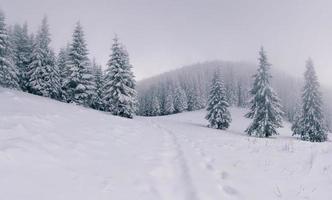 paysage d'hiver brumeux dans la forêt de montagne photo