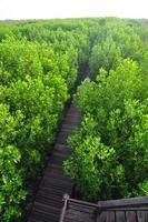 Pont en bois à travers le reboisement de la mangrove à Petchaburi photo