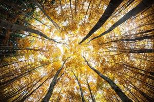 cime des arbres de la forêt d'automne