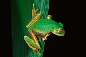 grenouille d'arbre de la forêt photo