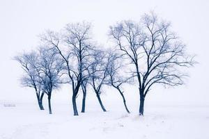 arbres enneigés photo