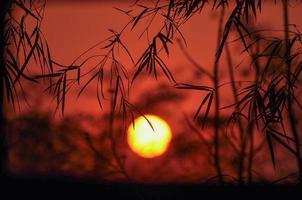coucher de soleil avec fond de feuille de bambou photo
