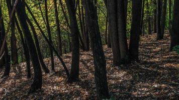 ombre profonde (jour vert) photo